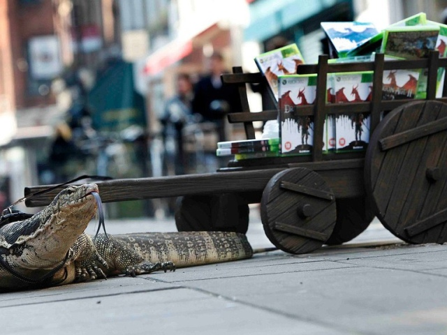 lizard_age